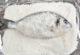 Як запекти рибу в солі